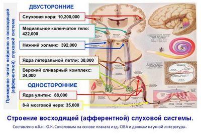 33 Тысячи труб: устройство органа