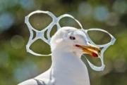 Бактерии помогут утилизировать пластик