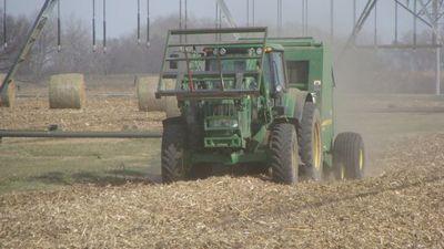 Биотопливо может быть опаснее для планеты, чем бензин