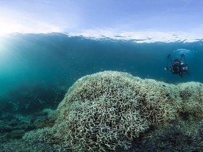 Большой барьерный риф стремительно гибнет