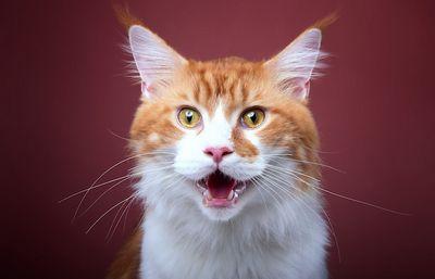 Что хотят сказать нам кошки?