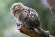 Что происходит закулисами милых фотографий сдикими животными?
