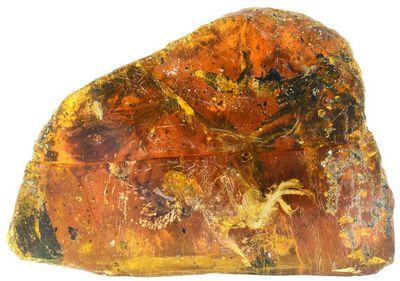Доисторический птенец, застывший в янтаре: фото