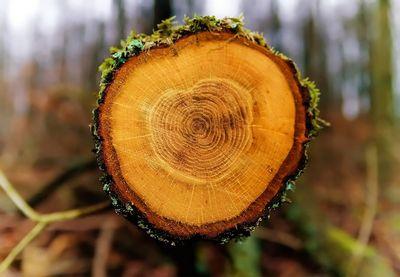 Древесные кольца рассказали ученым отайнах климата