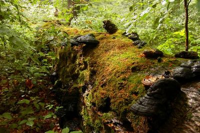 Древний гриб поможет в производстве биотоплива