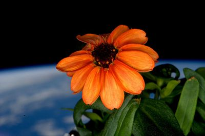 Фотоистория: растения вкосмосе