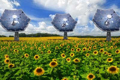 Фотоэлектрические подсолнухи от ibm производят электричество и воду