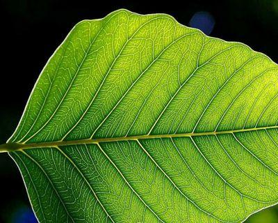 Искусственный фотосинтез. барьеры сломлены!