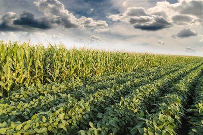 Как гмо влияют наокружающую среду?