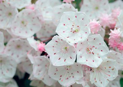 Как опыляется цветок-катапульта: видео
