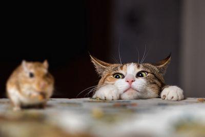 Кошки, возможно, понимают законы физики