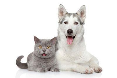 Кто лучше: кошки или собаки? рассказывают ученые