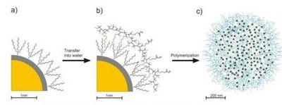 Квантовые точки освещают биологические процессы