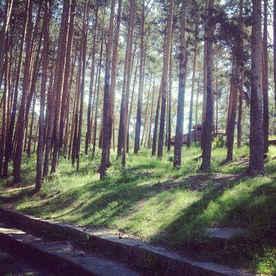 Лес чудес встране магов: пятый пошел