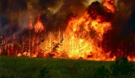 Лесной пожар перекинулся на поселок