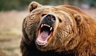 Медведь напал на беременную женщину