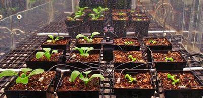 Мнение ученого офильме марсианин: можетли намарсе картофель цвести?