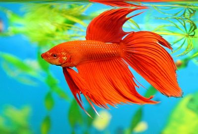 Могут ли рыбы думать и чувствовать?
