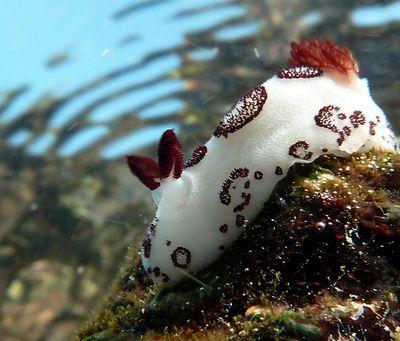 Морские кролики покорили интернет: фото ивидео