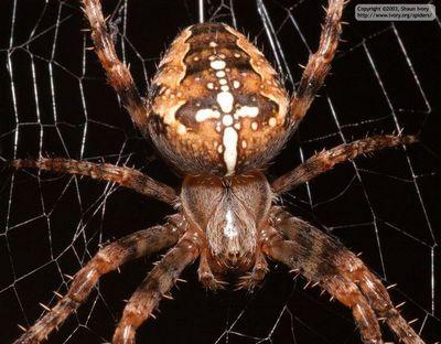 Небойтесь пауков: животные эффекты