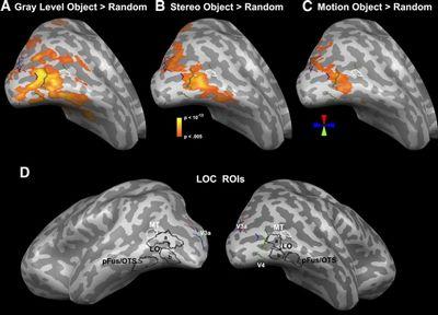 Нейросеть помогла понять распознавание лиц мозгом