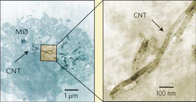 Новое свидетельство в пользу опасности нанотрубок