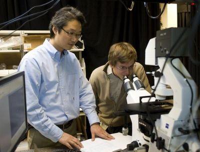Новые солнечные элементы самовосстанавливаются, как природные растительные системы