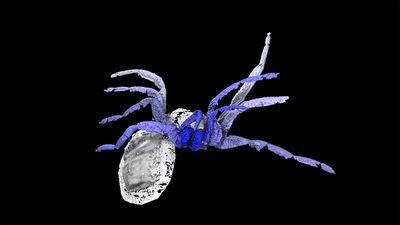 Обнаружен кузен пауков, неумевший плести паутину