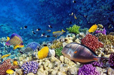 Океаны страдают отглобального потепления сильнее всего