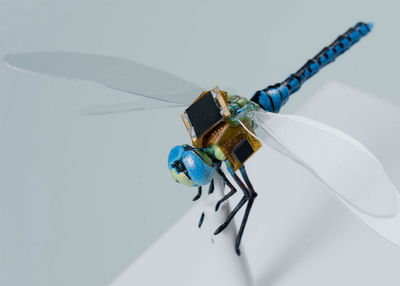 Оптогенетика поможет создать стрекозу-киборга