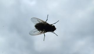 Пенсионерку-мужеубийцу разоблачили из-за мух