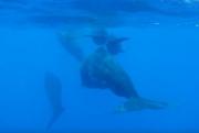 Редкие киты впервые сняты на видео