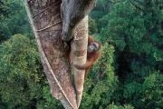 Самые смешные фотографии диких животных