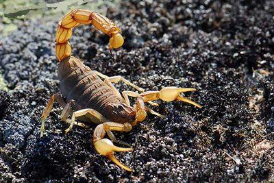 «Скорпионы» от «защиты»