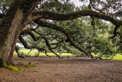 Случайные вибрации превращают деревья в электростанции
