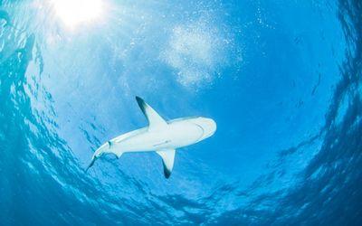 Специальная камера позволила распознать язык акул