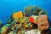 Светящаяся радуга глубоководных кораллов поразила ученых: видео