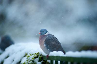 У птиц нашли «магнитные» нейроны
