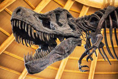 Ученые намерены пересмотреть «семейное древо» динозавров
