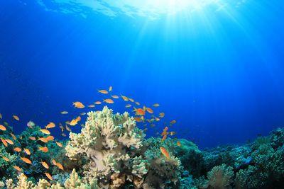 Ученые нашли нового врага коралловых рифов — пластик