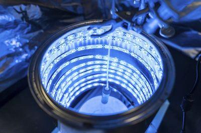 Ученые научились очищать воздух с помощью искусственного фотосинтеза