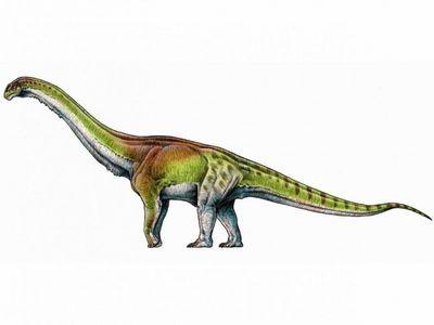 Ученые назвали крупнейшее сухопутное животное всех времен