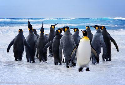 Ученые просят помощи вподсчете пингвинов нафотографиях