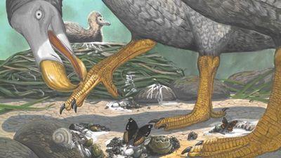 Ученые раскрыли секреты жизни додо