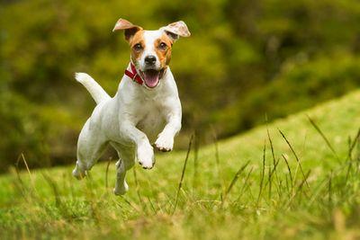 Ученые: собаки помнят больше, чем выдумаете