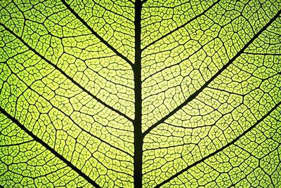 Ученые состарили фотосинтез