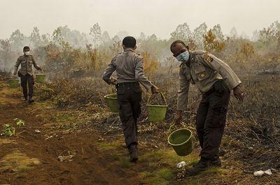 Ученые увеличили число жертв прошлогодних пожаров виндонезии