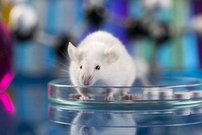 Ученые впервые омолодили стволовыми клетками целое животное