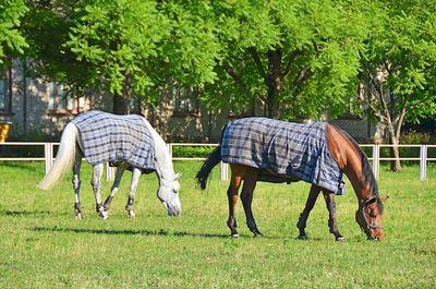 Ученые выяснили, что лошади могут общаться снами