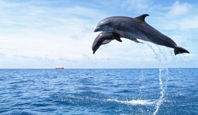 Ученые выяснили причину гибели дельфинов